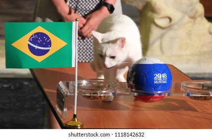 St. Petersburg / Russia - 06.22.2018: Psychic Achilles the cat from Hermitage museum predicts the victory of the Brazilian team over Costa Rica in the match of the group stage of the World Cup.