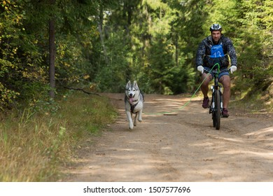 St. Petersburg, Russia. 14 September 2019. Sled dogs race Championship for dryland disciplines