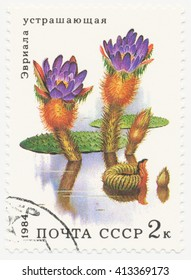 ST. PETERSBURG, RUSSIA - APR 30, 2016: A postmark printed in USSR, shows  Euriola (Euryale ferox Salisb), series Aquatic Plants, circa 1984