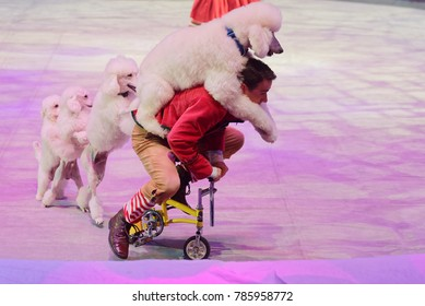 ST. PETERSBURG, RUSSIA - DECEMBER 28, 2017: Sergey Akimov as Kai with trained dogs in the circus show Snow Queen by Great Moscow circus. The show created by Zapashny brothers circus