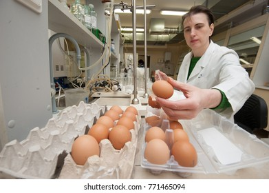 St. Petersburg, Russia - March 28, 2017: State food quality control in a specialized laboratory for compliance. The biologist checks the quality of chicken eggs.