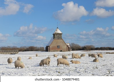 St Thomas a Becket Church, Fairfield , Romney Marsh, Kent, surrounded by Romney marsh sheep grazing in the snow