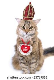St Valentine's Day cat