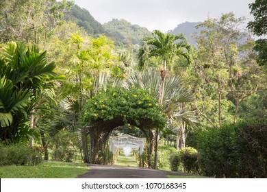 Der St. Vincent und die Grenadinen Botanischen Gärten befinden sich am 7. Dezember 2017 in Kingstown