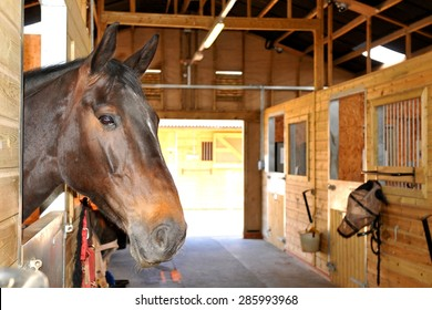 At the stables (selective focus on horse)