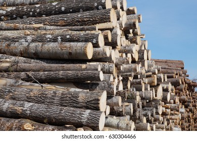 A Stack of aspen logs