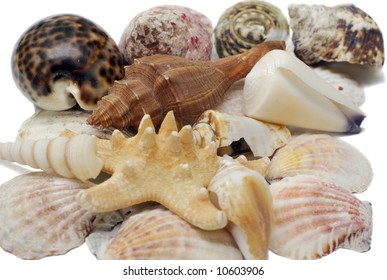 stack of assorted seashells isolated on white