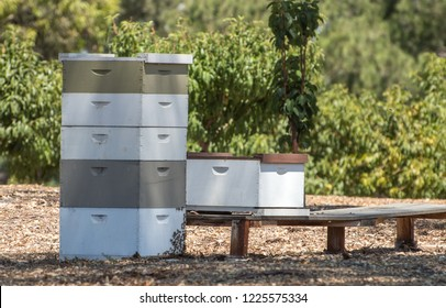 Stack of beehives