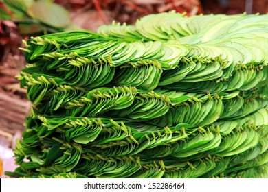 Stack of betel leaf in Madiwala market ,Bangalore.The betel leaf is cultivated in most of South and Southeast Asia.