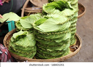 Stack of Betel leaves (Piper Betle) in old town Bangalore. Shredded betel leaves are mixed with ground nuts and lime paste. Men (and women) chew the mixture, called Paan, which produces red saliva.