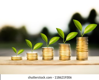 stack coins and money growing plant for finance and banking, saving money or interest increasing concept