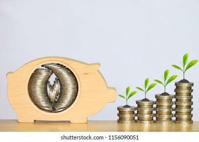 Stack of coins money in piggy bank wood and Growing plan on white background, investment and business concept