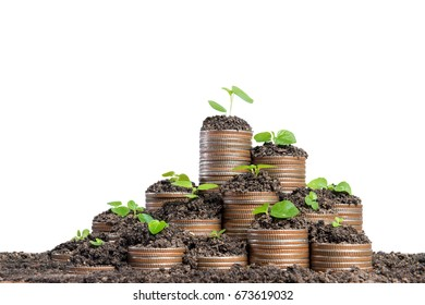 Stack of coins with small green plant isolated on white background , Business investment growth and trading concept