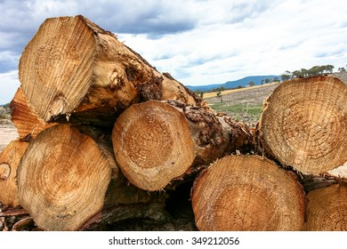 Stack of cut pine logs in forestry with detailed grain patterns and growth rings shown in cross section with deforest paddock in distance.