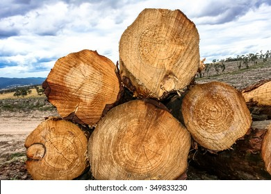 Stack of cut pine logs in forestry with detailed grain patterns and growth rings shown in cross section with deforestation of forest paddocks in distance.