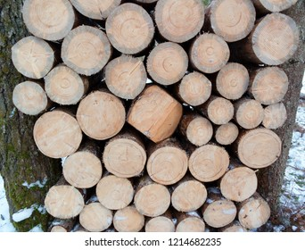 Stack of dry fir timber firewood