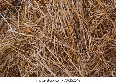 Stack of dry hay grass texture stockimage