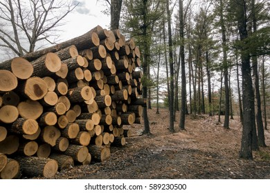 stack of felled tree trunks at logging site