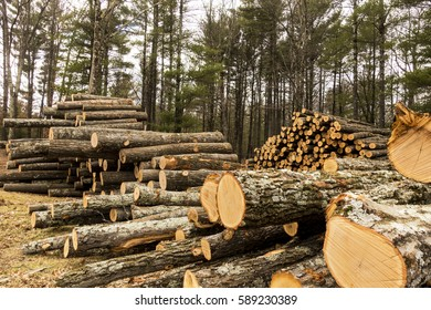 stack of felled trees at logging site