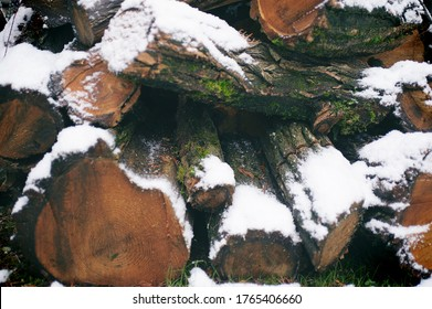 stack of firewood with moss and snow