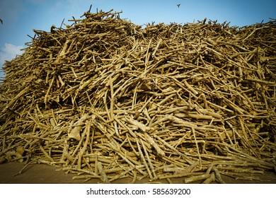 Stack of log rubber waiting transportation