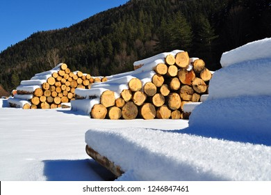 Stack lumber under snow on the way to Abant Lake in Bolu, Turkey.