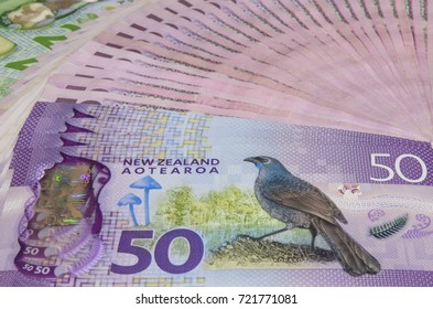 Stack of New Zealand Dollar banknotes show kokako blue wattled crow on them.