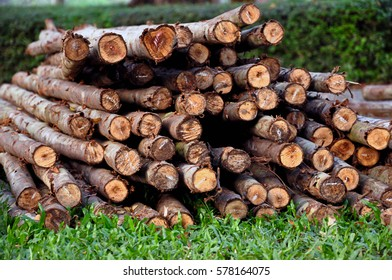 Stack or pile of logs or wood or woodpile on green grass