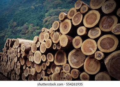 Stack pine log waiting transportation