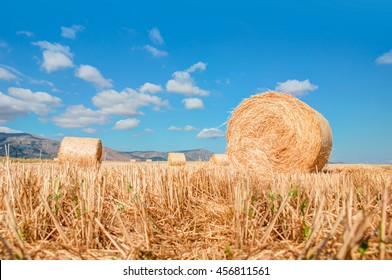 stack of straw on the mown field