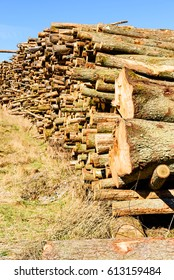 Stack of timber on a grass slope. This timber will most likely be used as biofuel.