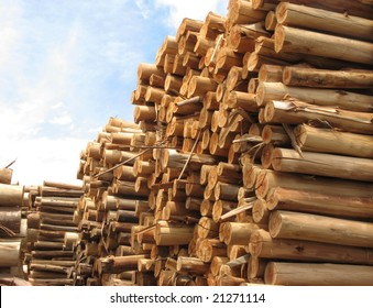 Stack of tree trunks of Eucalyptus that will be use in paper manufacture