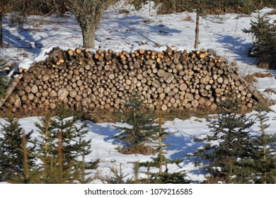 A stack of tree trunks in the forest, in a snowy landscape