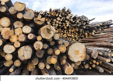 stack of tree trunks in scandinavian forest