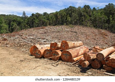 A stack of wooden logs at a forestry in South Africa.  Lumber or deforestation concept image.