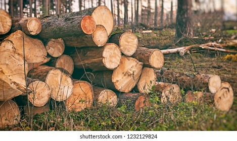 A stack of wooden trunks lying in the forest