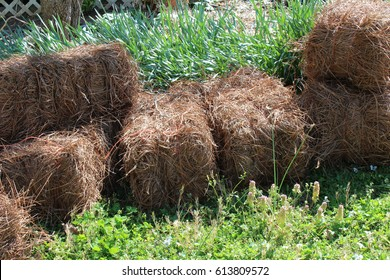 Stacked bales of pine straw in spring