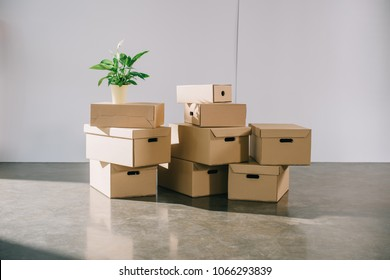 stacked cardboard boxes and potted plant during relocation