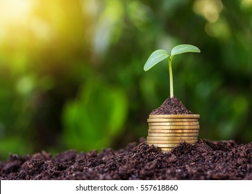 Stacked coins placed on the soil and seedling on top.Yellow tone with sun