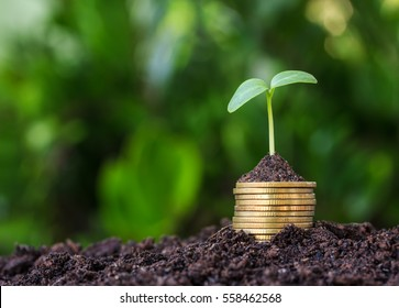 Stacked coins placed on the soil and seedling on top.