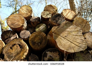 Stacked freshly sawn tree trunks