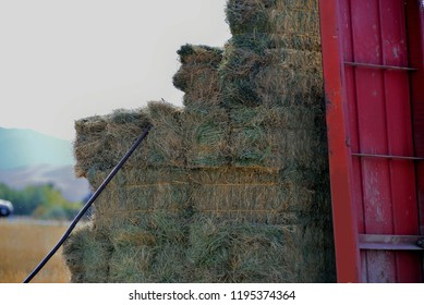 Stacked hay just off the mechanized stacker