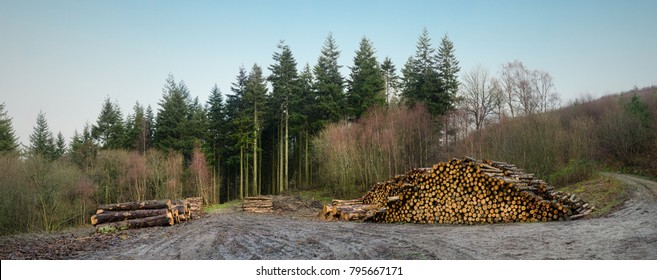Stacked Logs from forestry work at the sides of a forest track.