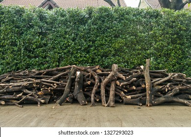 stacked of logs in front of tree wall