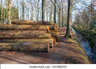 Stacked old and thick tree trunks waiting for transport to the sawmill. The tree trunks have been cut down in a large Dutch forest. Next to the pile is a small stream. It is springtime now.