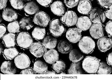 Auf einem Haufen Eukalyptusholz für Hintergrund aufgetapft.Schwarz-Weiß-Foto.