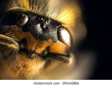 Stacked Photography of Wasp
