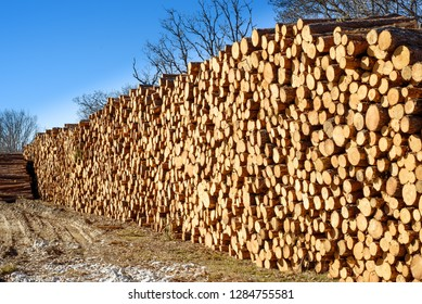 stacked pine wood logs at industrial logging