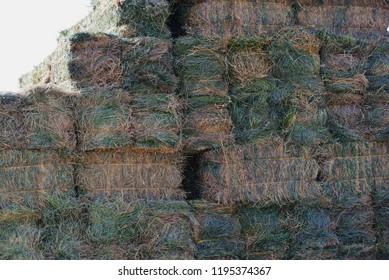 Stacked square bales of alfalfa hay.