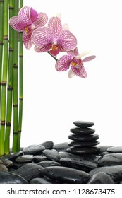 Stacked wet stones and pink orchid with bamboo grove